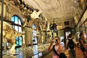Muzea.
