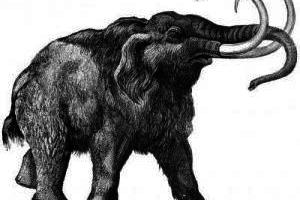 Najstarszy mamut świata znaleziony w Dolnej Austrii.